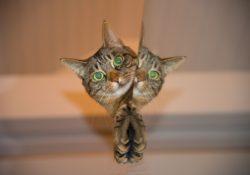 kočka označí území