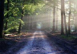jak objevit vlastní cestu