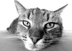 kočičí pověra