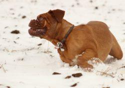 Co všechno má vliv na zdraví psího mazlíčka v zimě?