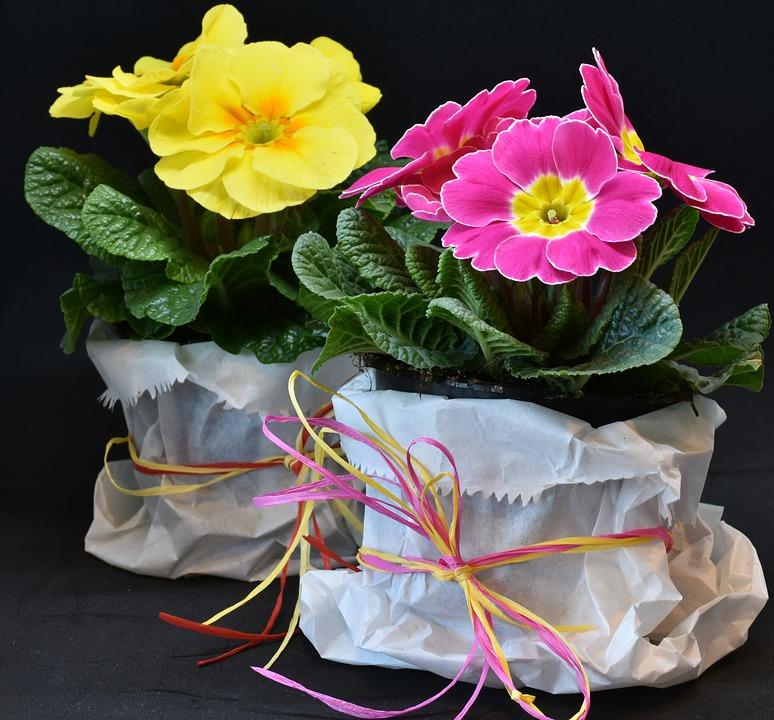 Typicky jarní květiny, kterými rozzáříte okenní parapety