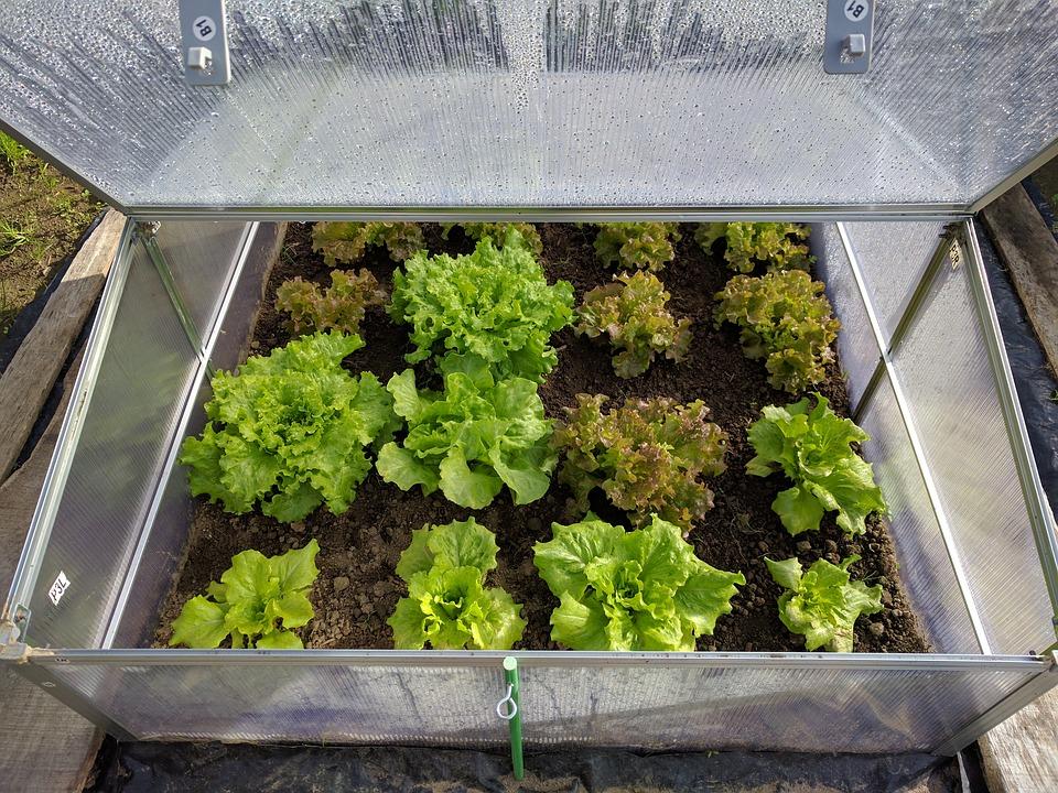I na podzim si vypěstujte ve skleníku čerstvou zeleninu