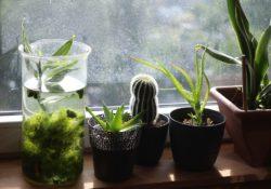 Máte domácí mazlíčky? Volte neškodné pokojové rostliny do interiéru