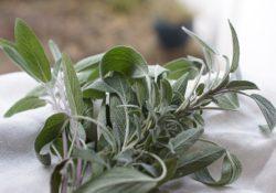 Naučte se používat bylinky. Jaké především?