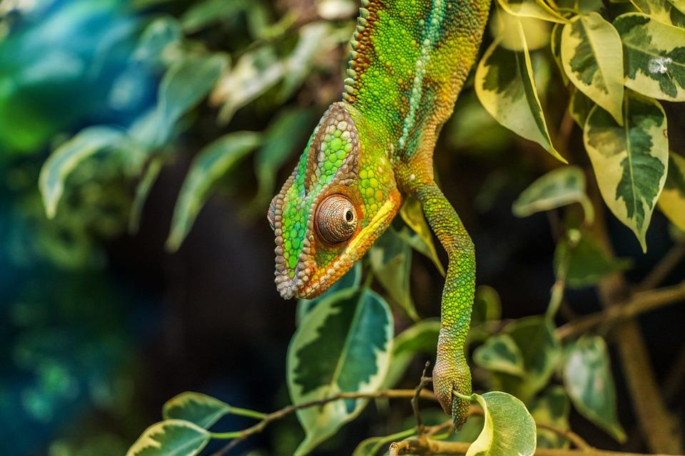 Hady a chameleóni ako nenároční maznáčikovia, ktoré nestresuje vaše neprítomnosť