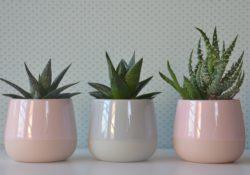 Pokojové rostliny, které zvládnou i péči začátečníků