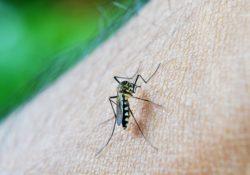 Bylinky proti komárům. Jaké zahání nepříjemný hmyz?