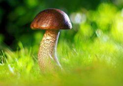 Jsou houby, které prospívají. Jaké zařadit do jídelníčku?